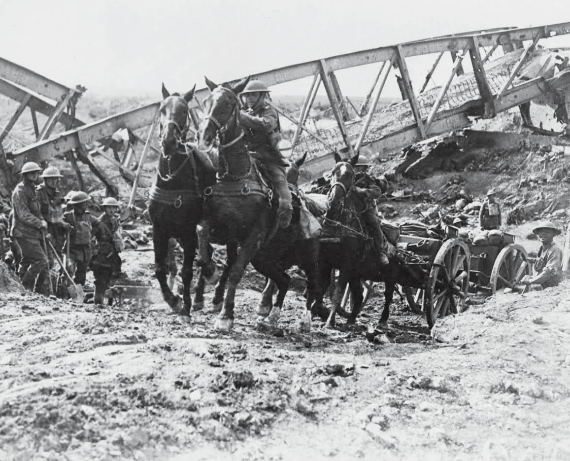 14 millions d'animaux ont participé à la Première Guerre mondiale | Playbac  Presse Digital: journaux jeunesse Le Petit Quotidien, Mon Quotidien,  L'actu, L'éco et plus !